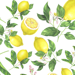 JUICY LEMON(ジューシーレモン)※A4サイズ